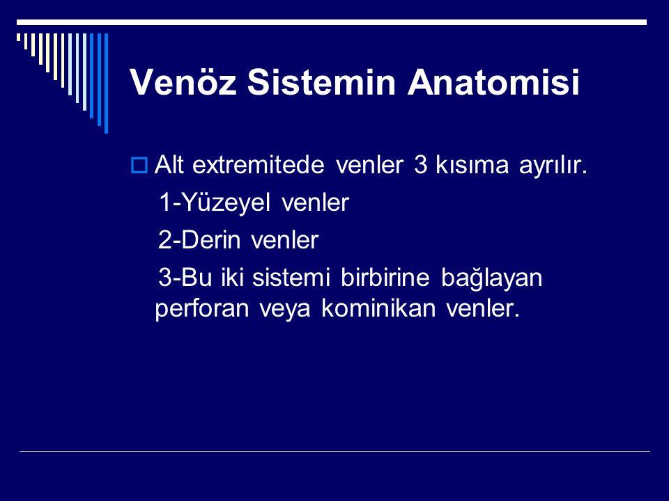 Venöz Sistemin Anatomisi  Alt extremitede venler 3 kısıma ayrılır.