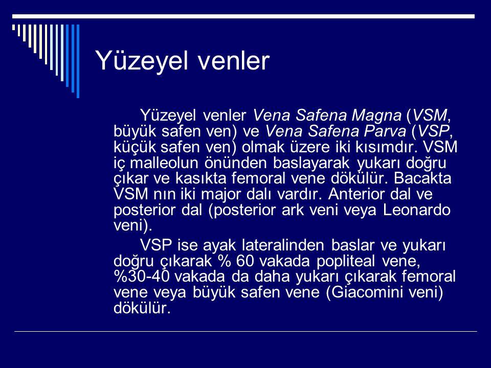 Yüzeyel venler Yüzeyel venler Vena Safena Magna (VSM, büyük safen ven) ve Vena Safena Parva (VSP, küçük safen ven) olmak üzere iki kısımdır.