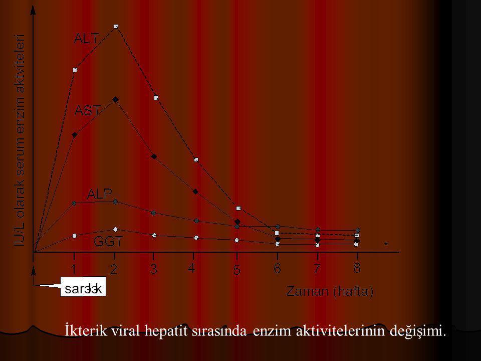İkterik viral hepatit sırasında enzim aktivitelerinin değişimi.