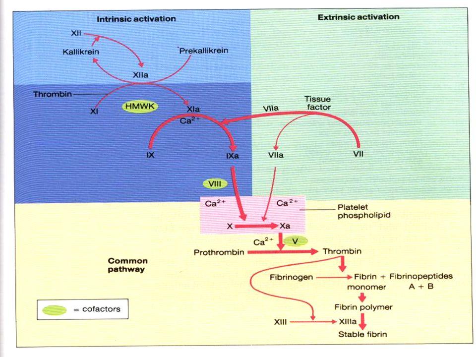 TROMBOZDA TEDAVİ  Trombusun eritilmesi (Ürokinaz, streptokinaz veya tPA ile)  Trombusun büyümesinin engellenmesi ve korunma (antitrombotik tedavi) 1.