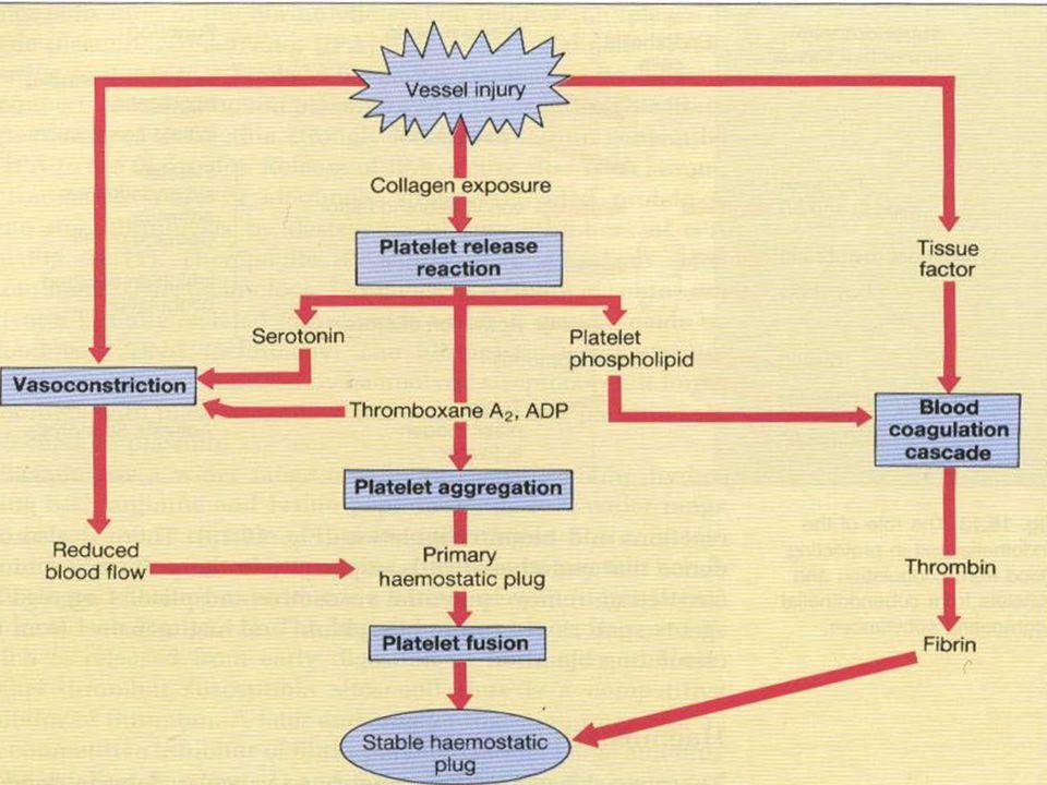 7 Trombositler  Vücudun en küçük hücreleri  Hacim (MPV) ortalama 7-11 fl  Çapları 1-3 µ,  150-450.000/mm 3 ;  Yaşam süresi yak.