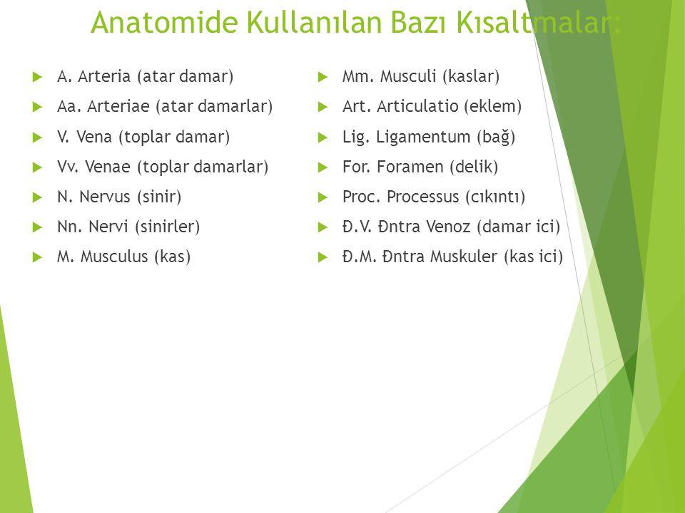 Anatomide Kullanılan Bazı Kısaltmalar:  A. Arteria (atar damar)  Aa. Arteriae (atar damarlar)  V. Vena (toplar damar)  Vv. Venae (toplar damarlar)