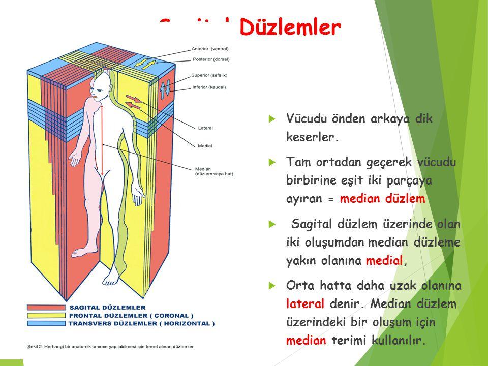 Sagital Düzlemler  Vücudu önden arkaya dik keserler.  Tam ortadan geçerek vücudu birbirine eşit iki parçaya ayıran = median düzlem  Sagital düzlem