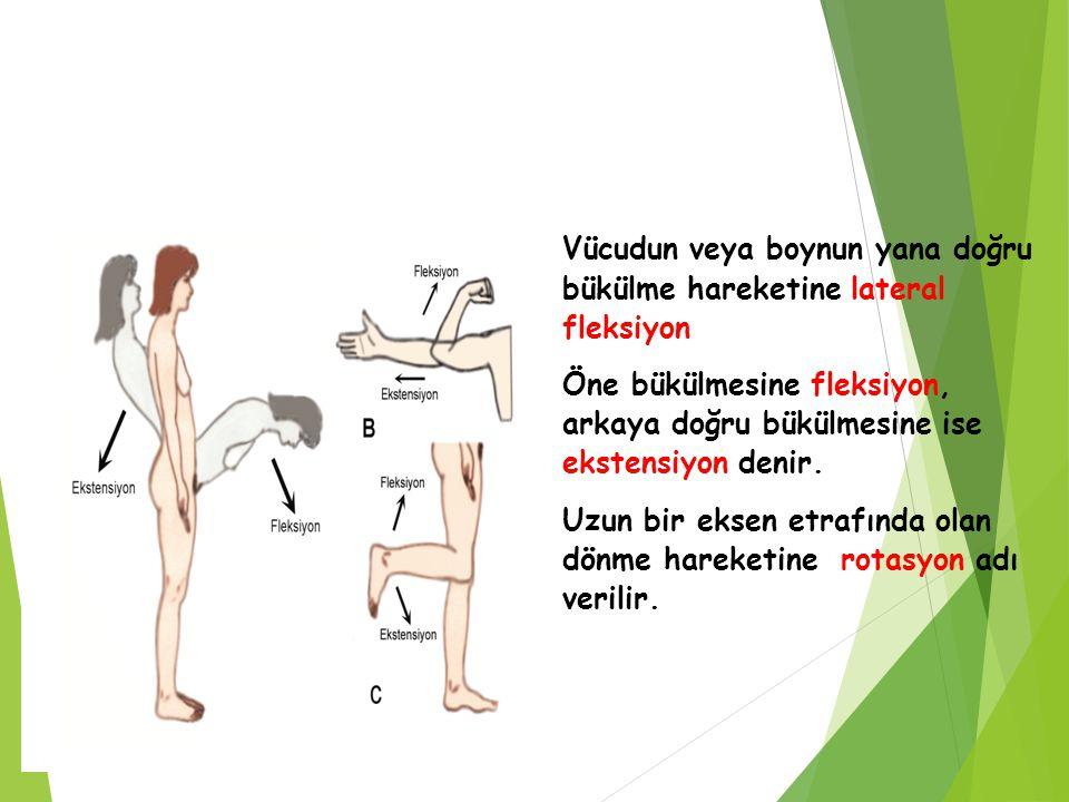 Vücudun veya boynun yana doğru bükülme hareketine lateral fleksiyon Öne bükülmesine fleksiyon, arkaya doğru bükülmesine ise ekstensiyon denir. Uzun bi