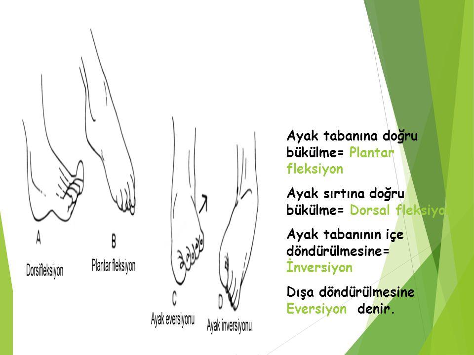 Ayak tabanına doğru bükülme= Plantar fleksiyon Ayak sırtına doğru bükülme= Dorsal fleksiyon Ayak tabanının içe döndürülmesine= İnversiyon Dışa döndürü