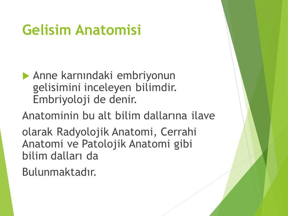 Gelisim Anatomisi  Anne karnındaki embriyonun gelisimini inceleyen bilimdir. Embriyoloji de denir. Anatominin bu alt bilim dallarına ilave olarak Rad