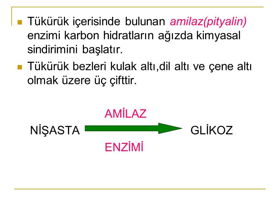 Tükürük içerisinde bulunan amilaz(pityalin) enzimi karbon hidratların ağızda kimyasal sindirimini başlatır. Tükürük bezleri kulak altı,dil altı ve çen