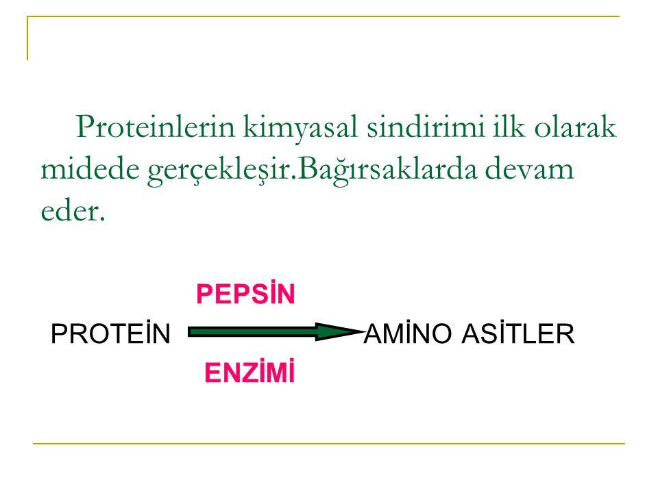 Proteinlerin kimyasal sindirimi ilk olarak midede gerçekleşir.Bağırsaklarda devam eder. PEPSİN PROTEİN AMİNO ASİTLER ENZİMİ