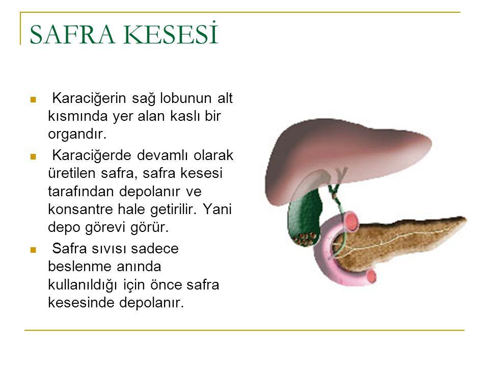 SAFRA KESESİ Karaciğerin sağ lobunun alt kısmında yer alan kaslı bir organdır.