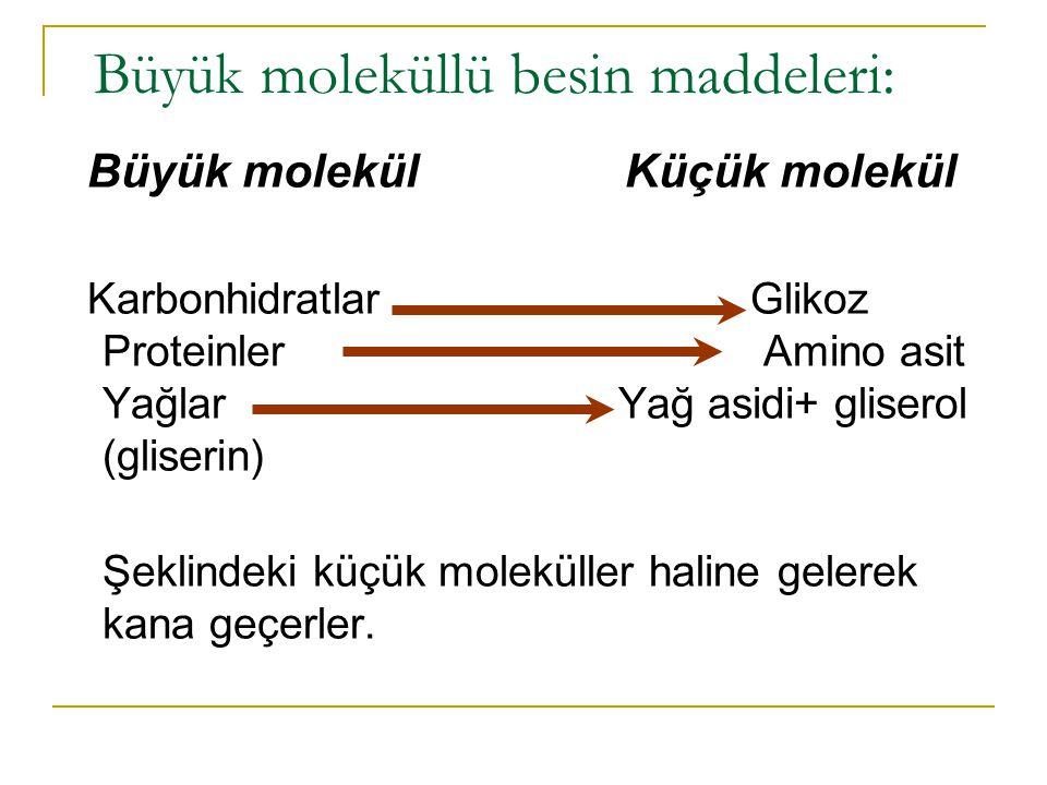 Büyük moleküllü besin maddeleri: Büyük molekül Küçük molekül Karbonhidratlar Glikoz Proteinler Amino asit Yağlar Yağ asidi+ gliserol (gliserin) Şeklindeki küçük moleküller haline gelerek kana geçerler.