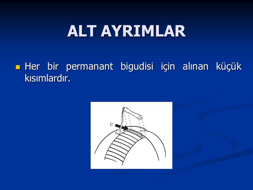 ALT AYRIMLAR Her bir permanant bigudisi için alınan küçük kısımlardır. Her bir permanant bigudisi için alınan küçük kısımlardır.