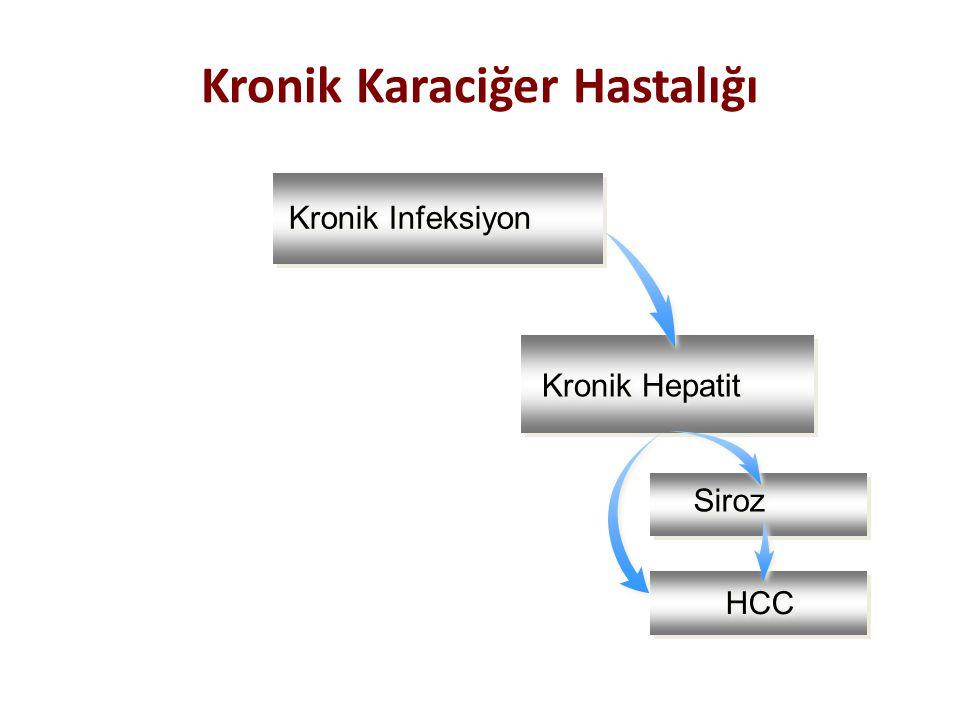 Kronik Infeksiyon Kronik Hepatit Siroz HCC Kronik Karaciğer Hastalığı