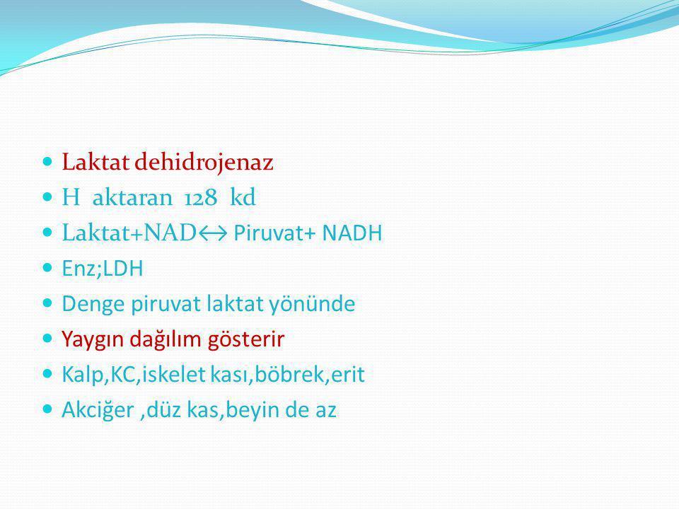 Laktat dehidrojenaz H aktaran 128 kd Laktat+NAD↔ Piruvat+ NADH Enz;LDH Denge piruvat laktat yönünde Yaygın dağılım gösterir Kalp,KC,iskelet kası,böbre