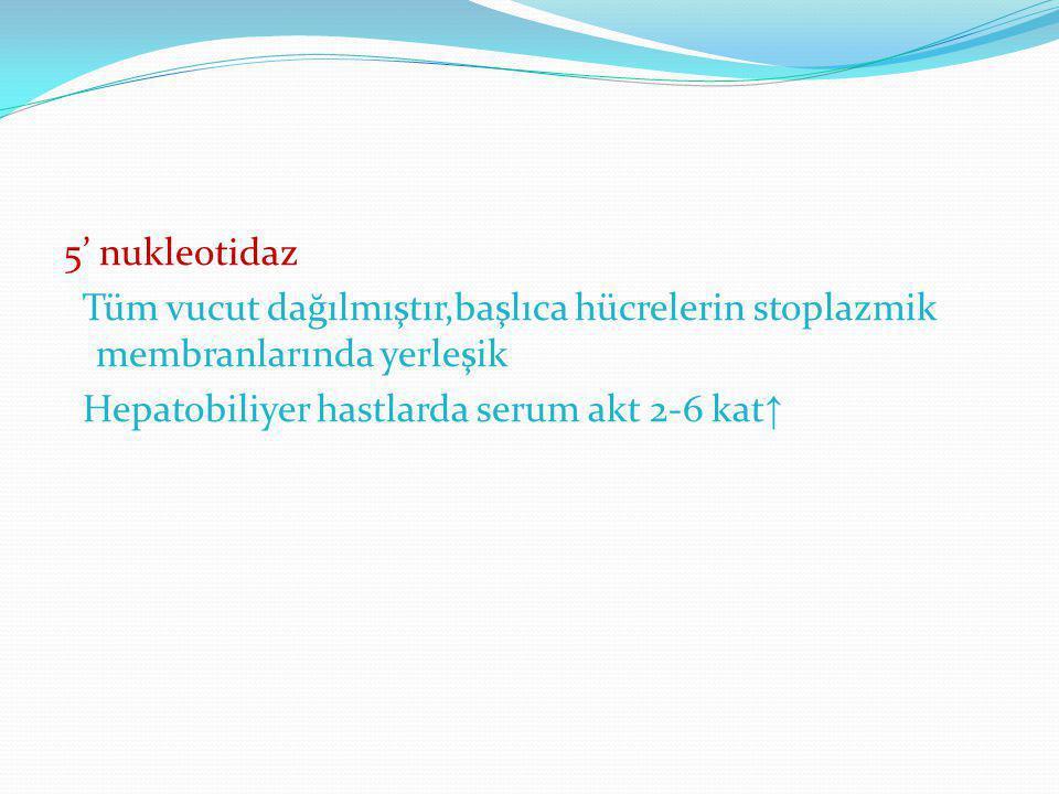 5' nukleotidaz Tüm vucut dağılmıştır,başlıca hücrelerin stoplazmik membranlarında yerleşik Hepatobiliyer hastlarda serum akt 2-6 kat ↑