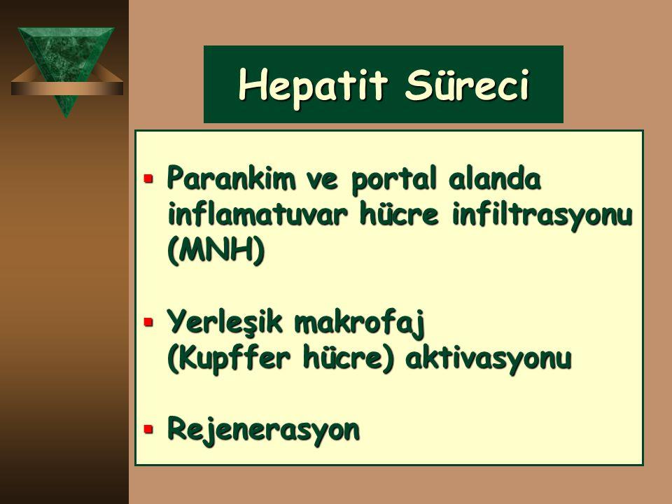 Hepatit Süreci  Parankim ve portal alanda inflamatuvar hücre infiltrasyonu (MNH)  Yerleşik makrofaj (Kupffer hücre) aktivasyonu  Rejenerasyon