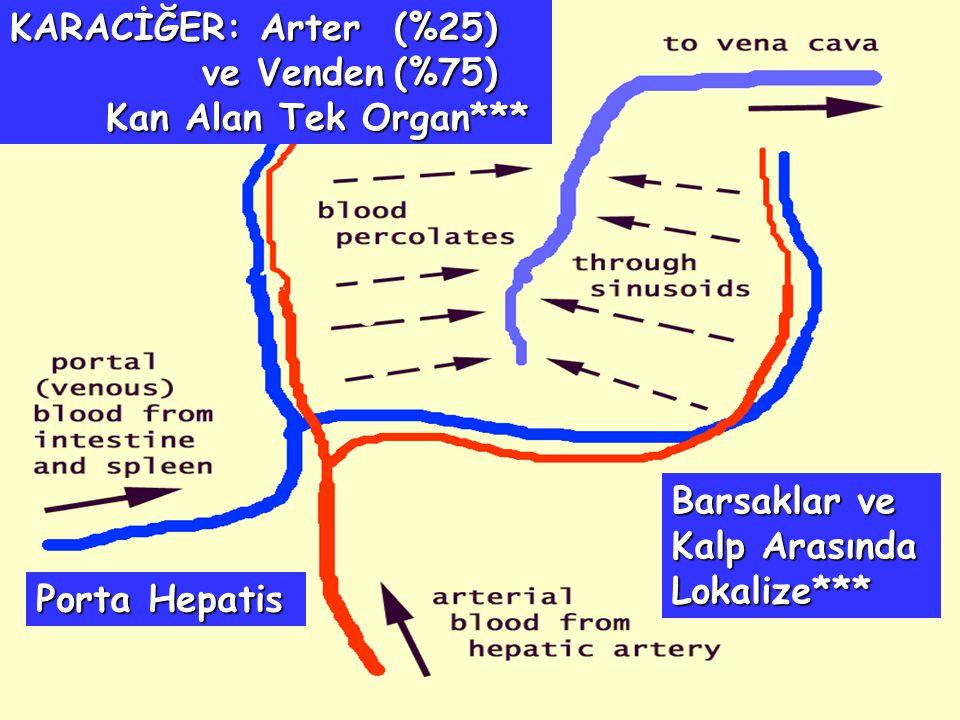 KARACİĞER: Arter(%25) ve Venden(%75) Kan Alan Tek Organ*** Barsaklar ve Kalp Arasında Lokalize*** Porta Hepatis