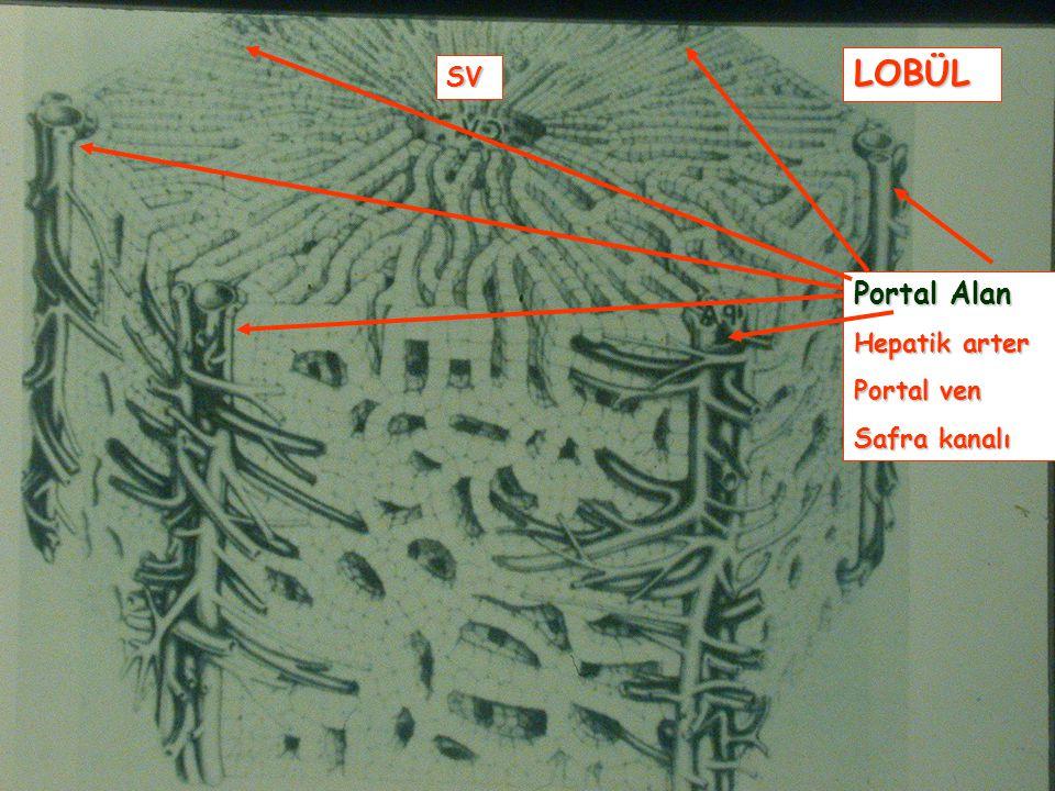 Laboratuvar Testleri ASTALTGGT Üç test birlikte artmışsa Sorunlu organ karaciğerdir…