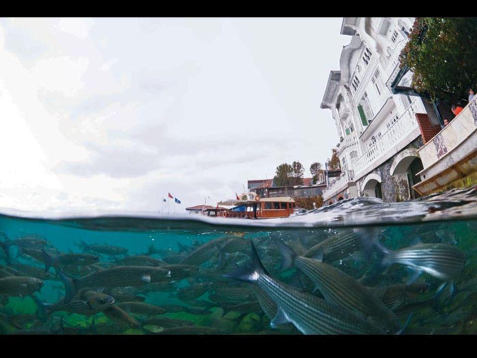 Düşünen ve çeken kim mi..? Sualtı fotoğrafçısı Alptekin Baloğlu, 10.5 mm. balık gözü objektifle (yani bir balığın gözünün ölçülerindeki objektifiyle)