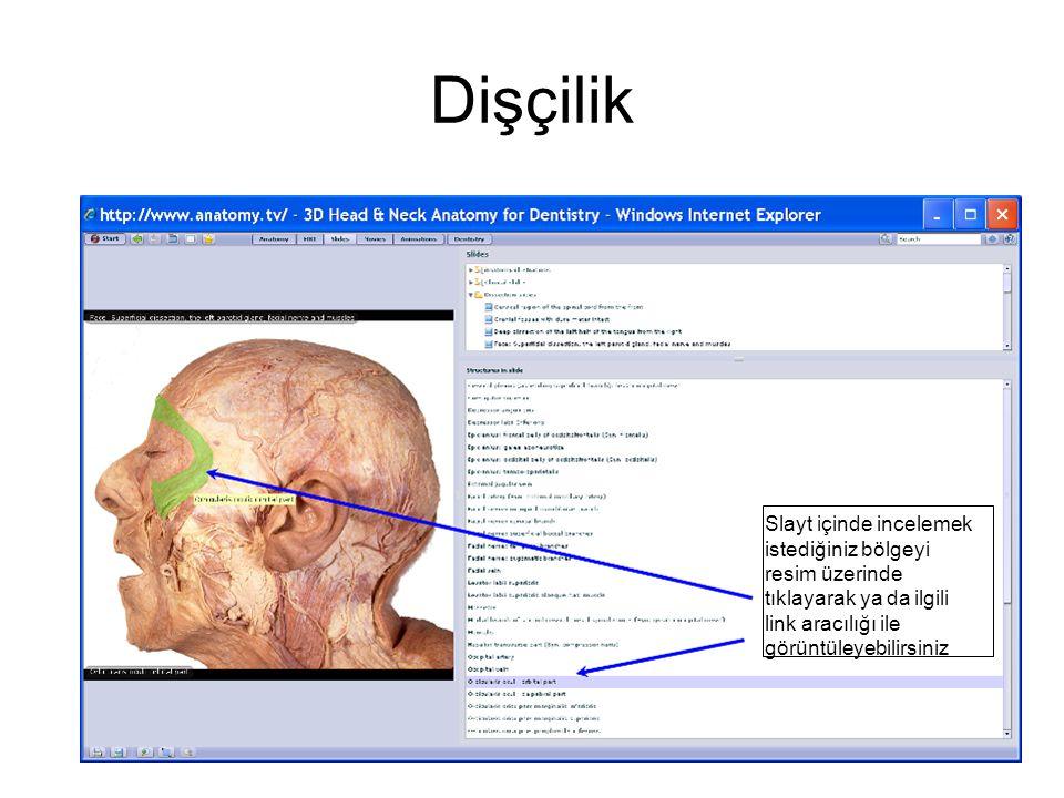 Dişçilik Slayt içinde incelemek istediğiniz bölgeyi resim üzerinde tıklayarak ya da ilgili link aracılığı ile görüntüleyebilirsiniz