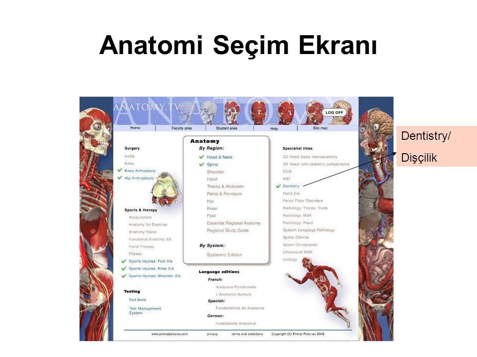 Anatomi Seçim Ekranı Dentistry/ Dişçilik