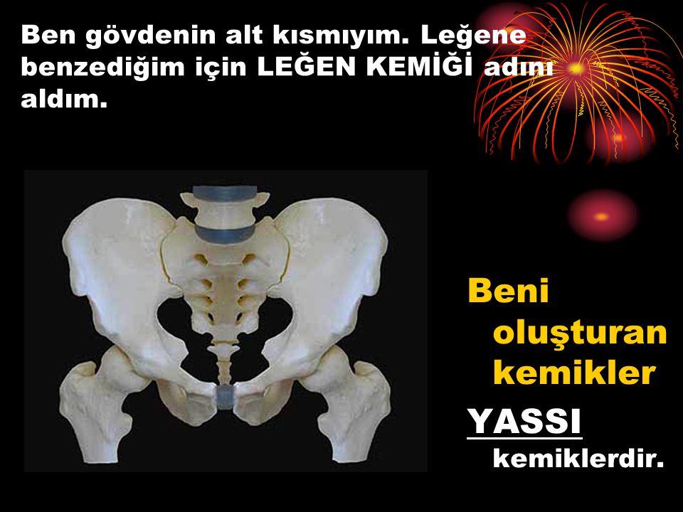 Göğüs kafesi ve kalça kemiğini oluşturan kemikler YASSI Benim içimde hangi organlar var? Kalp, akciğer, mide, karaciğer, böbrekler, bağırsaklar. Omurl