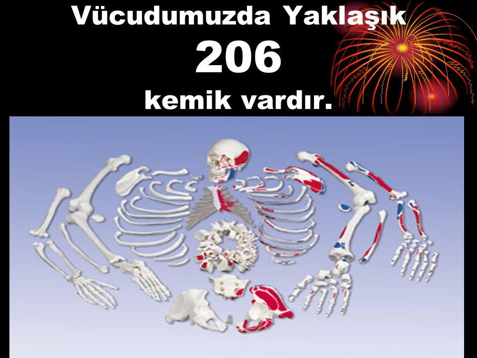 Vücudumuzda Yaklaşık 206 kemik vardır.