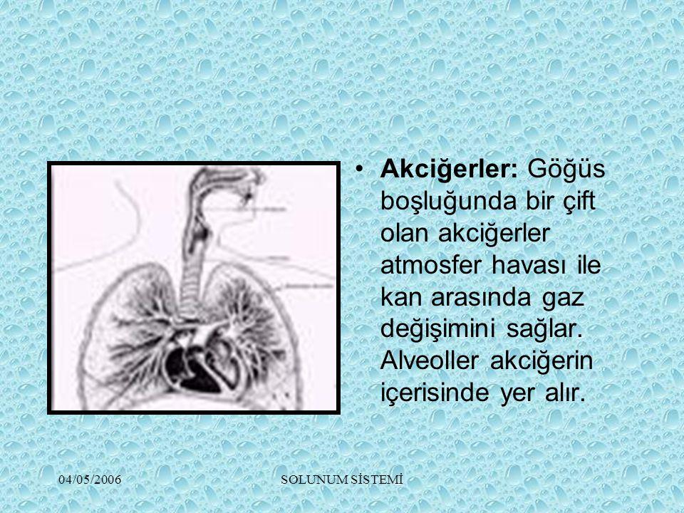 04/05/2006SOLUNUM SİSTEMİ Akciğerler: Göğüs boşluğunda bir çift olan akciğerler atmosfer havası ile kan arasında gaz değişimini sağlar. Alveoller akci