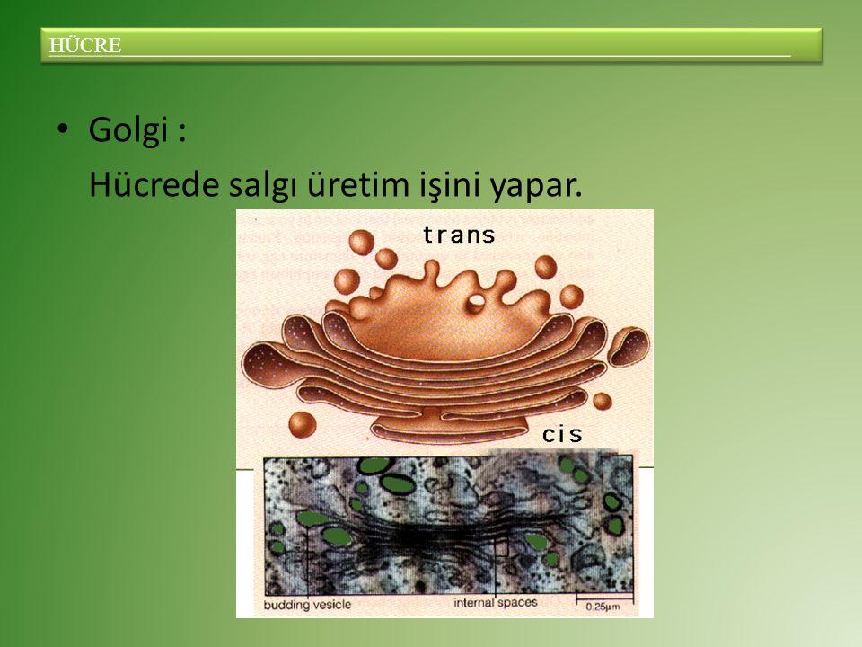 Golgi : Hücrede salgı üretim işini yapar.