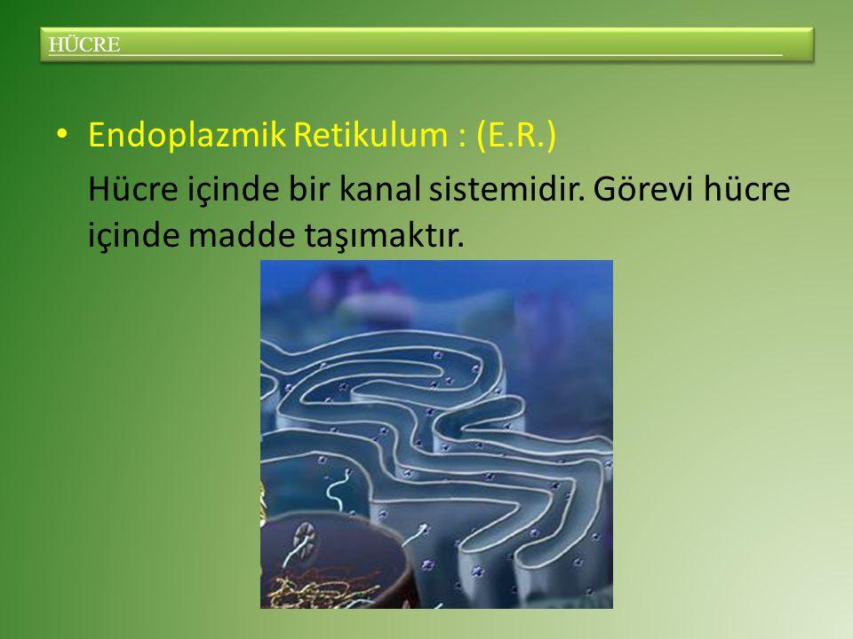Endoplazmik Retikulum : (E.R.) Hücre içinde bir kanal sistemidir.