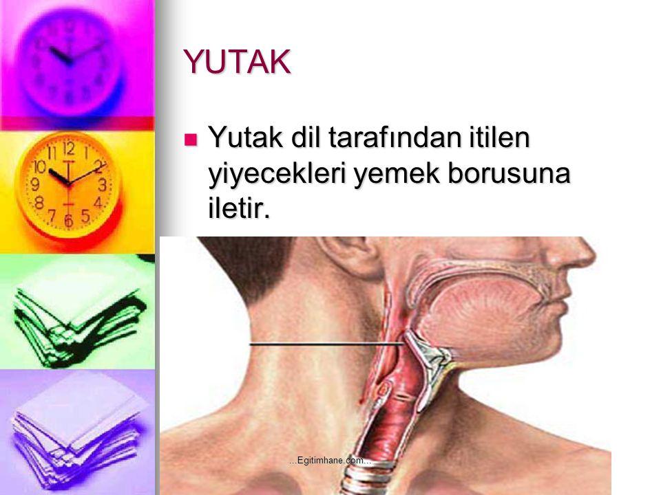 YUTAK Yutak dil tarafından itilen yiyecekleri yemek borusuna iletir. Yutak dil tarafından itilen yiyecekleri yemek borusuna iletir....Egitimhane.com..