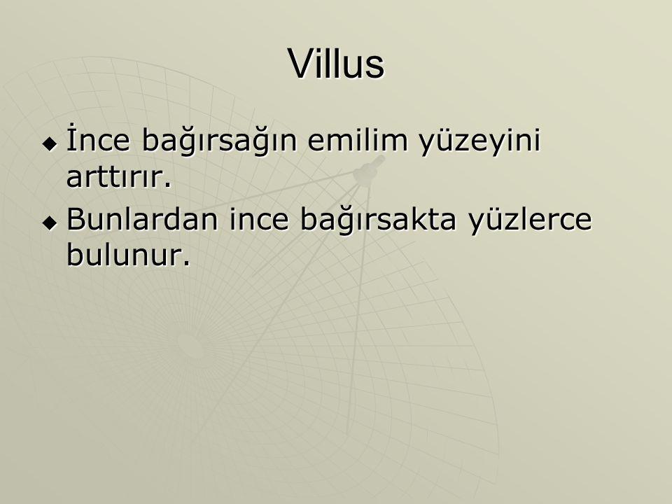 Villus  İnce bağırsağın emilim yüzeyini arttırır.  Bunlardan ince bağırsakta yüzlerce bulunur.