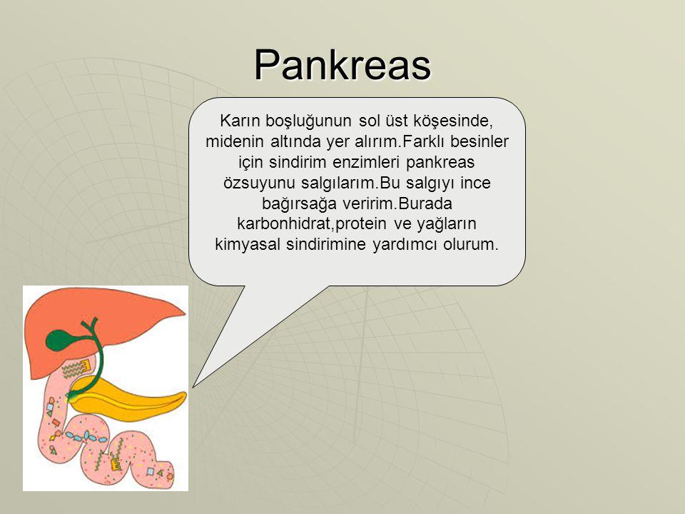 Pankreas Karın boşluğunun sol üst köşesinde, midenin altında yer alırım.Farklı besinler için sindirim enzimleri pankreas özsuyunu salgılarım.Bu salgıyı ince bağırsağa veririm.Burada karbonhidrat,protein ve yağların kimyasal sindirimine yardımcı olurum.