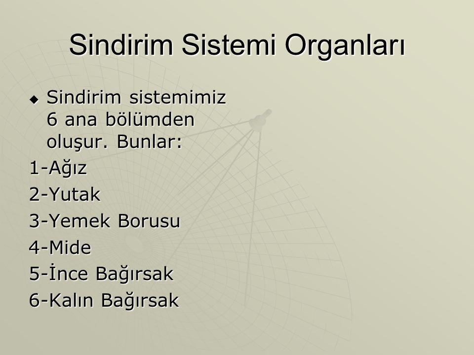 Sindirim Sistemi Organları  Sindirim sistemimiz 6 ana bölümden oluşur.