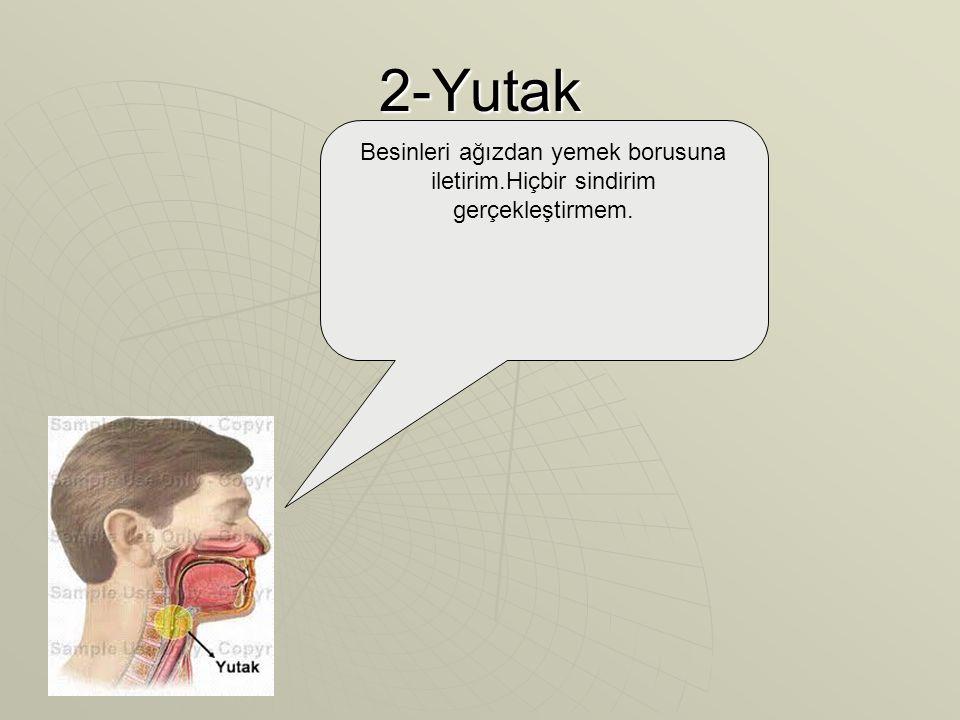 2-Yutak Besinleri ağızdan yemek borusuna iletirim.Hiçbir sindirim gerçekleştirmem.