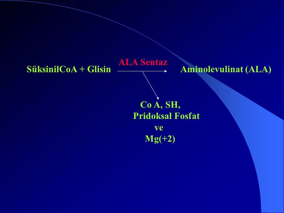 SüksinilCoA + Glisin ALA Sentaz Aminolevulinat (ALA) Co A, SH, Pridoksal Fosfat ve Mg(+2)