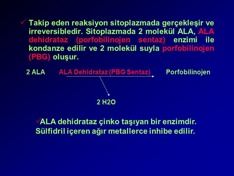 Takip eden reaksiyon sitoplazmada gerçekleşir ve irreversibledir.