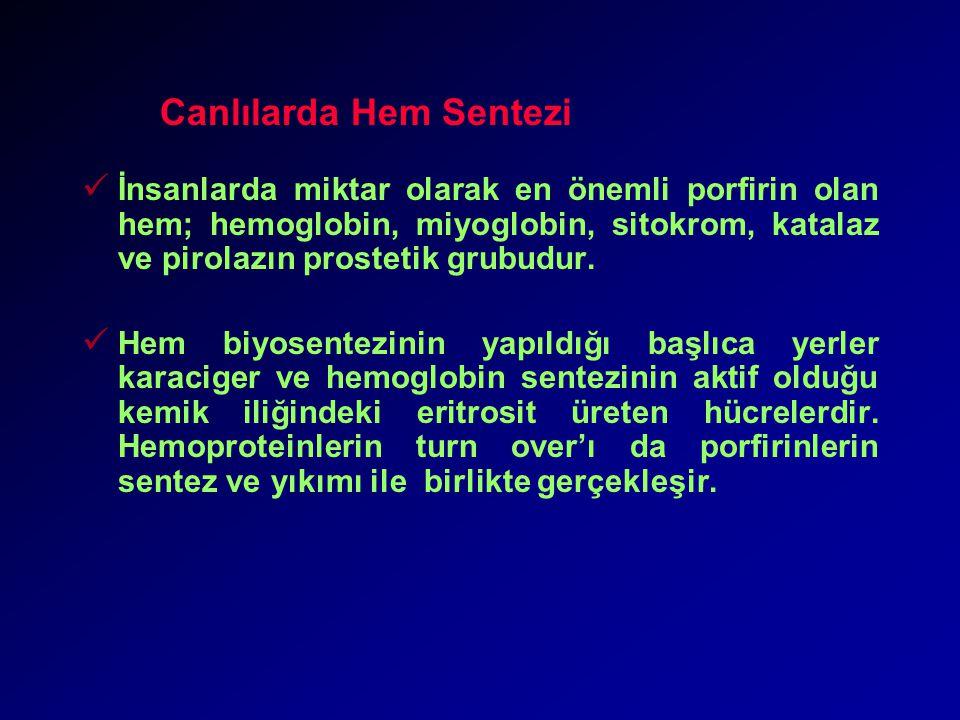 Canlılarda Hem Sentezi İnsanlarda miktar olarak en önemli porfirin olan hem; hemoglobin, miyoglobin, sitokrom, katalaz ve pirolazın prostetik grubudur.