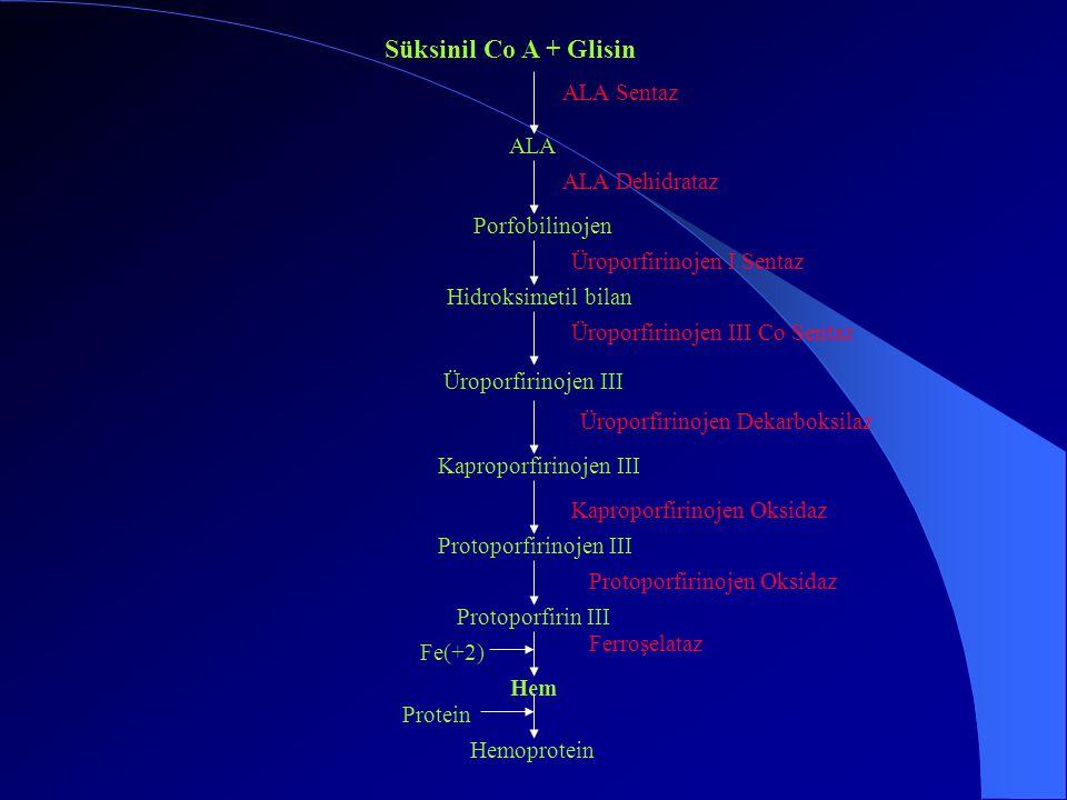 Porfirin sentezinin ilk basamağı süksinil Co A ve glisin kondanzasyonudur.