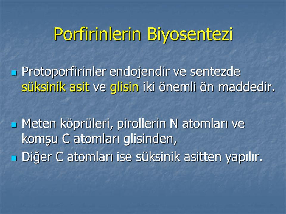 Porfirinlerin Biyosentezi Protoporfirinler endojendir ve sentezde süksinik asit ve glisin iki önemli ön maddedir. Protoporfirinler endojendir ve sente