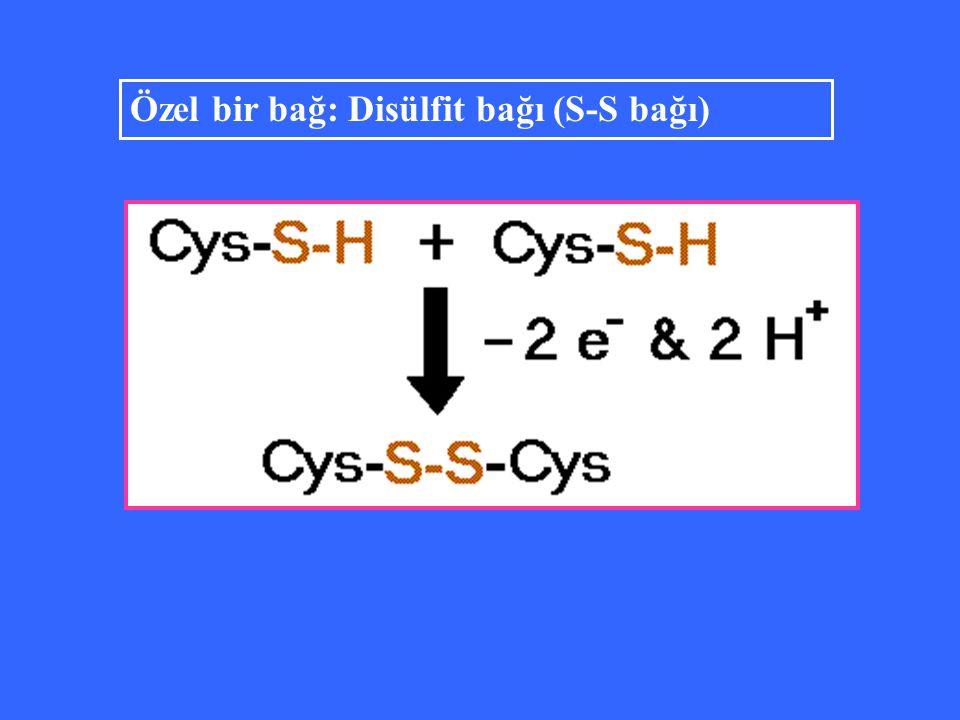 Özel bir bağ: Disülfit bağı (S-S bağı)