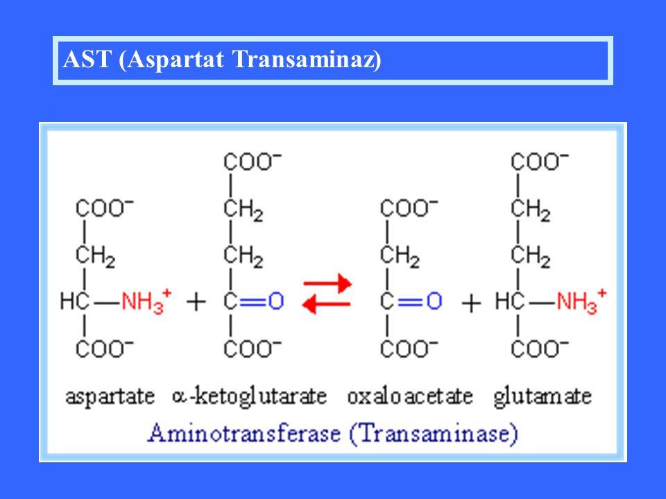 AST (Aspartat Transaminaz)