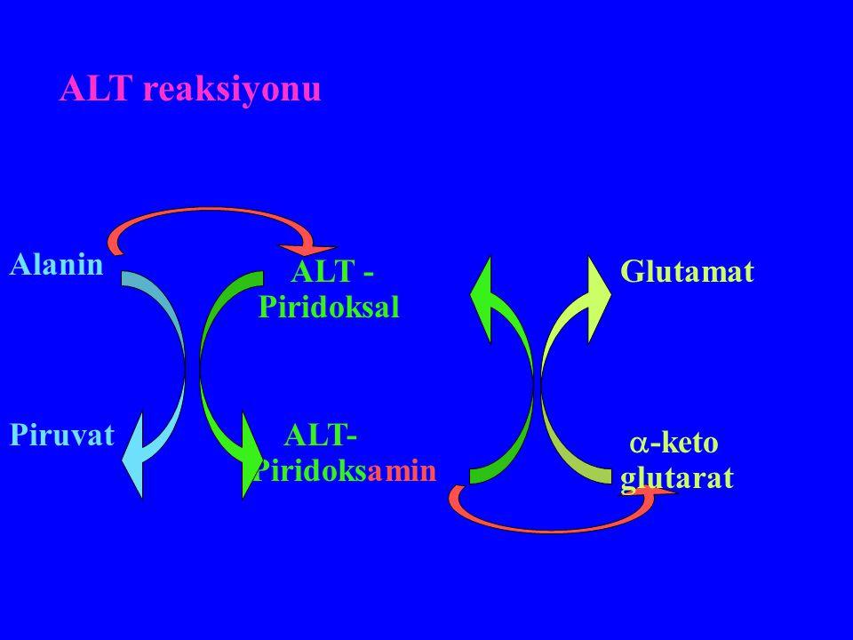 ALT reaksiyonu Alanin Piruvat ALT - Piridoksal  -keto glutarat ALT- Piridoksamin Glutamat
