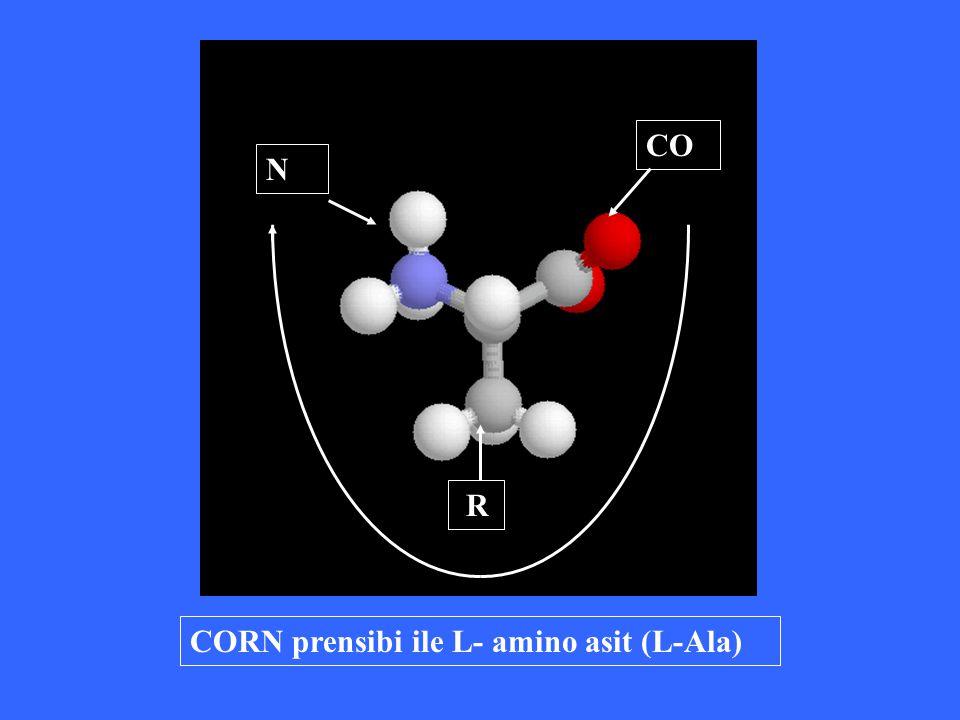 CORN prensibi ile L- amino asit (L-Ala) N R CO