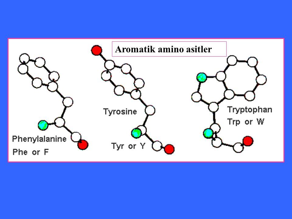 Aromatik amino asitler