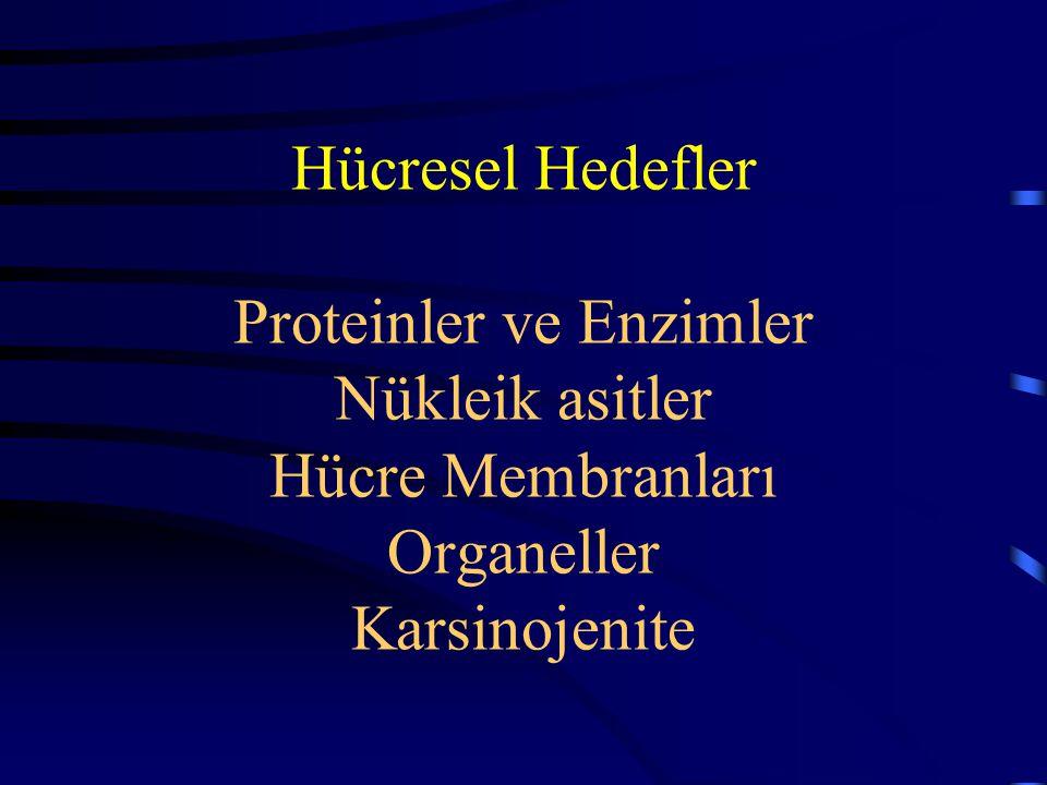 Hücresel Hedefler Proteinler ve Enzimler Nükleik asitler Hücre Membranları Organeller Karsinojenite