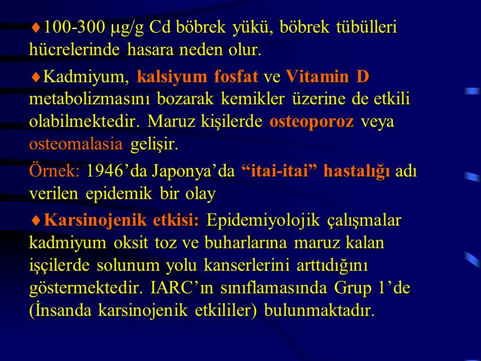 100-300  g/g Cd böbrek yükü, böbrek tübülleri hücrelerinde hasara neden olur.  Kadmiyum, kalsiyum fosfat ve Vitamin D metabolizmasını bozarak kemi