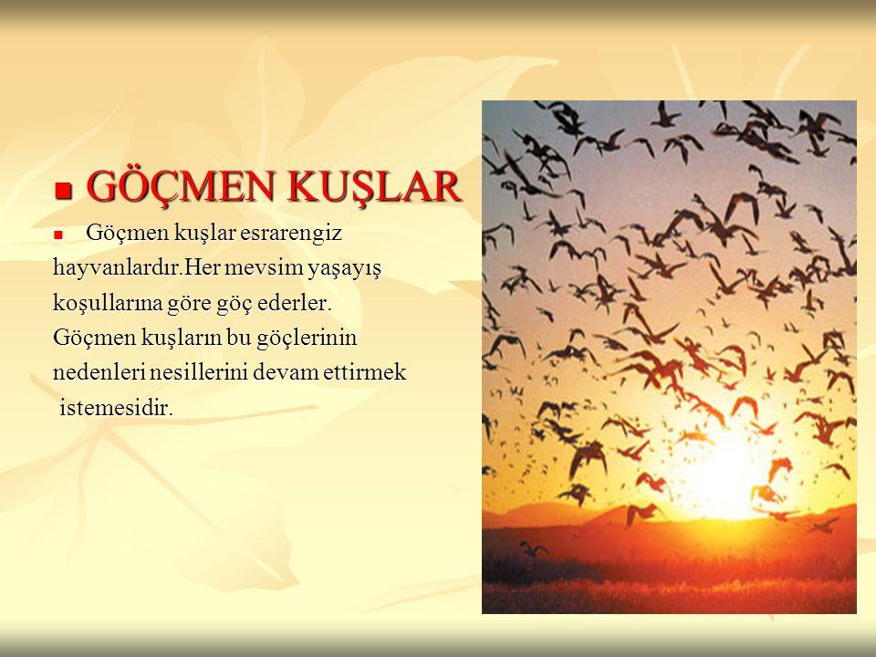 GÖÇMEN KUŞLAR GÖÇMEN KUŞLAR Göçmen kuşlar esrarengiz Göçmen kuşlar esrarengiz hayvanlardır.Her mevsim yaşayış koşullarına göre göç ederler. Göçmen kuş
