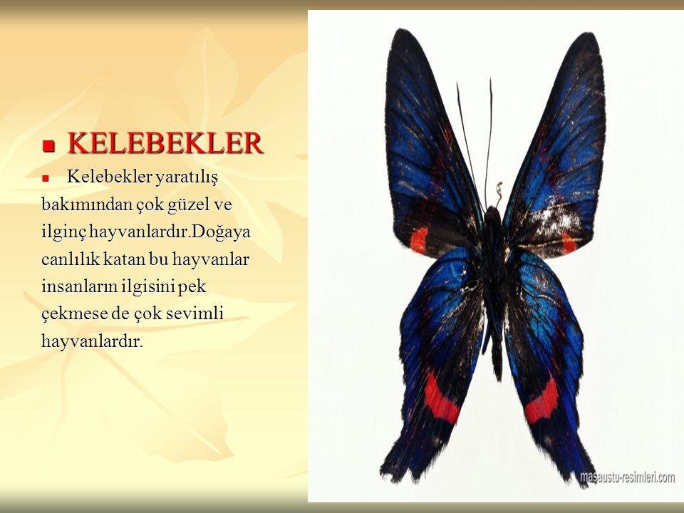 KELEBEKLER KELEBEKLER Kelebekler yaratılış Kelebekler yaratılış bakımından çok güzel ve ilginç hayvanlardır.Doğaya canlılık katan bu hayvanlar insanla