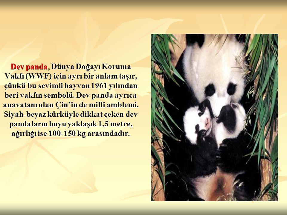 Dev panda, Dünya Doğayı Koruma Vakfı (WWF) için ayrı bir anlam taşır, çünkü bu sevimli hayvan 1961 yılından beri vakfın sembolü. Dev panda ayrıca anav
