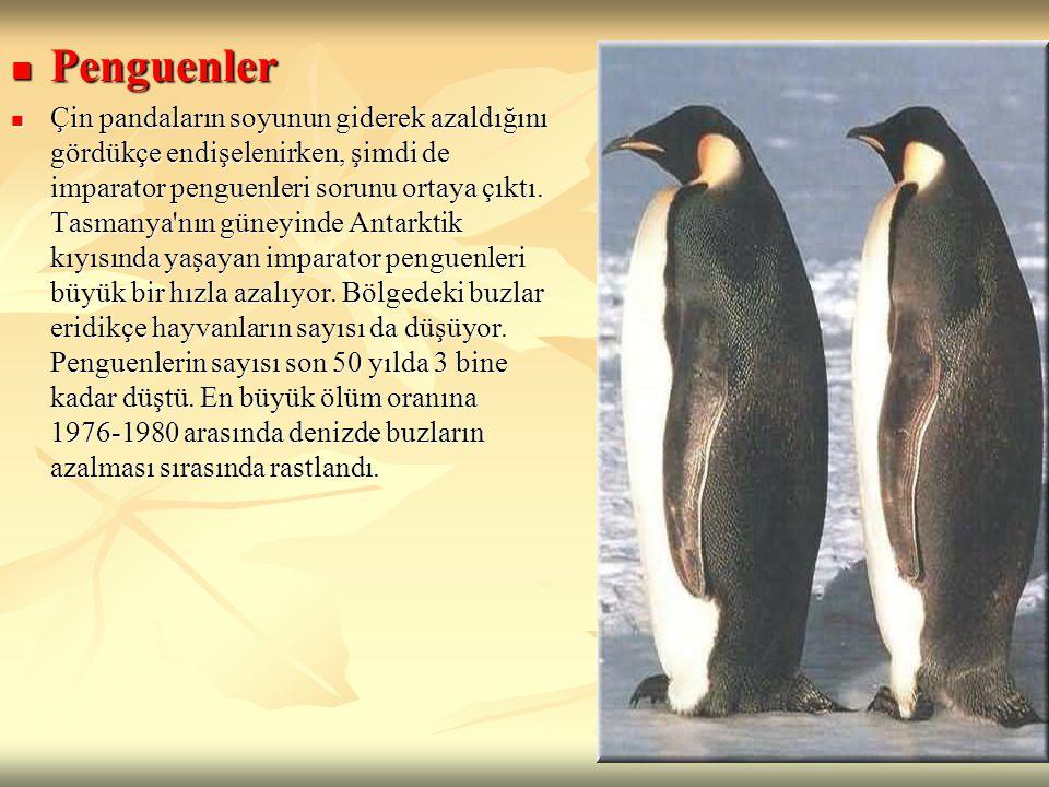 Penguenler Penguenler Çin pandaların soyunun giderek azaldığını gördükçe endişelenirken, şimdi de imparator penguenleri sorunu ortaya çıktı. Tasmanya'